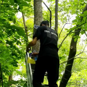 Monteur de décors dans les arbres