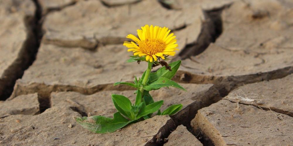 Survivre ensemble à l'incertitude